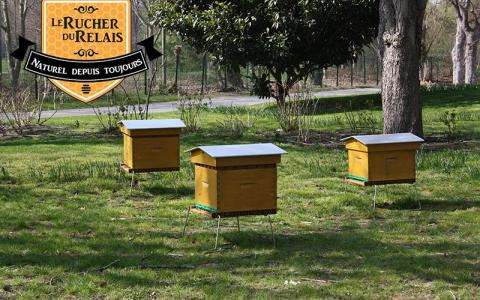 Discover the sweet taste of honey just outside Paris